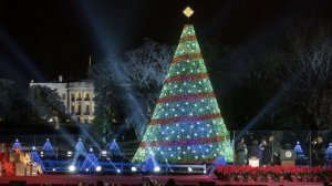The History Of The National Christmas Tree