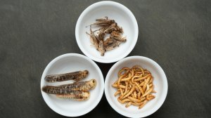 Who Needs Beef When You Can Eat Bugs?