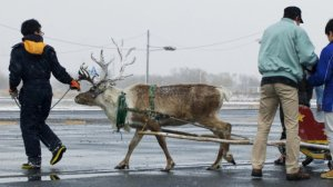 Domino's Tries (And Fails) To Deliver Pizza Via Reindeer In Japan