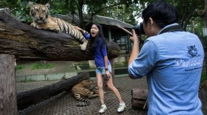 TripAdvisor Will Stop Selling Tickets For Wild Animal Attractions